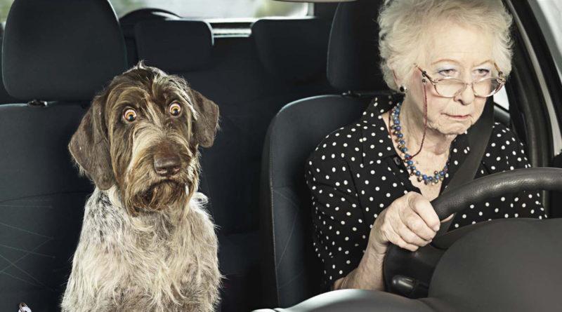 dog granny