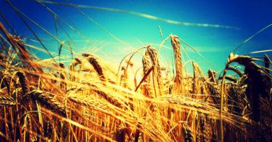 soběstačnost potravin zrno jako světová měna, pokec24